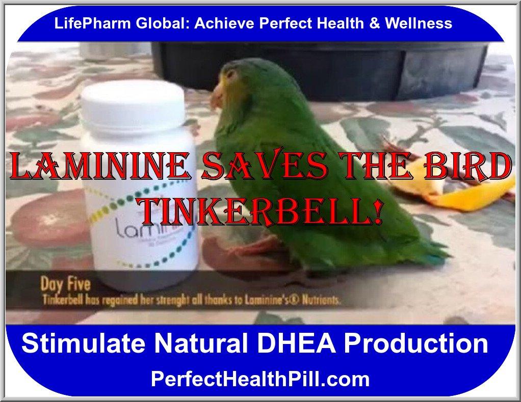BIRD TINKERBELL: LAMININE
