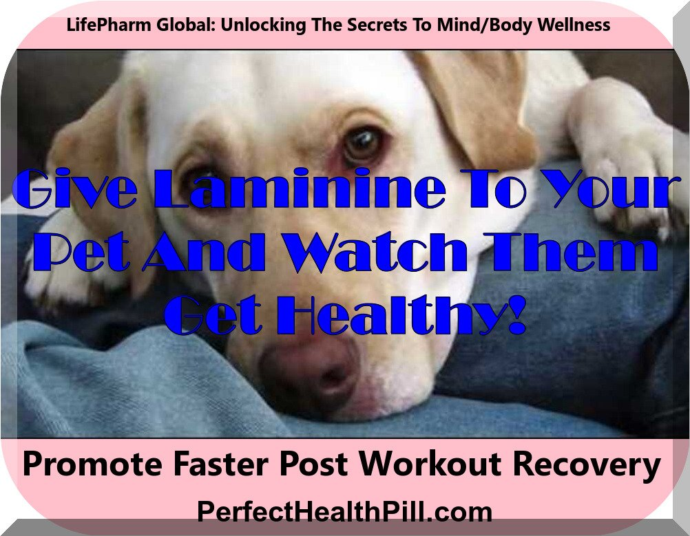 Can I give Laminine to my pet cat or dog? (A LifePharm video)