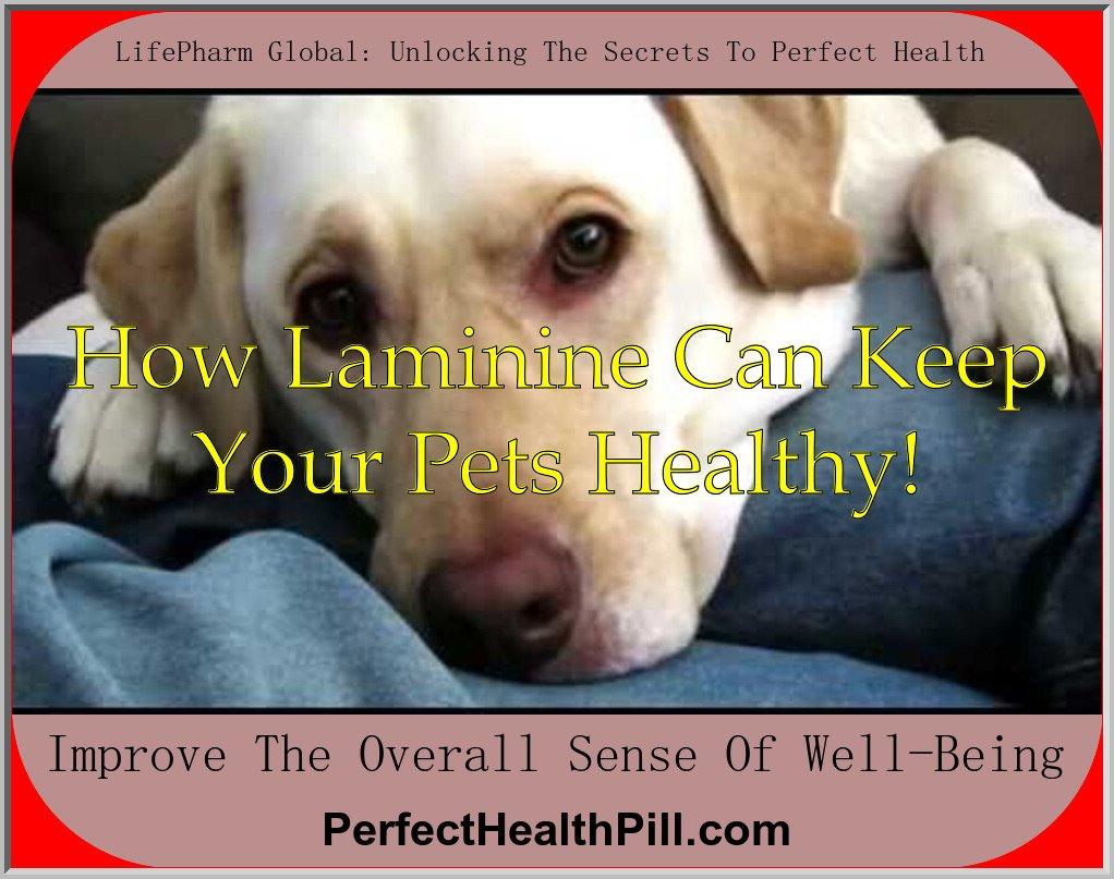 Pets and Laminine