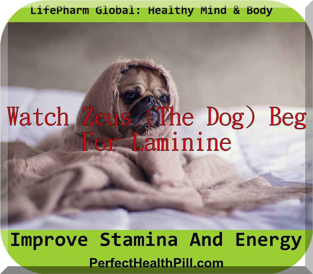 Laminine is People and Pet Approved!